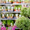 38% Off Nursery Plants and Supplies