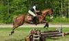 Fairview Farms Jjc - Brimfield: $79 for $175 Worth of Horseback Riding — Fairview Farms Jjc