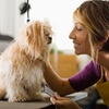 Up to 65% Off Dog-Grooming Services