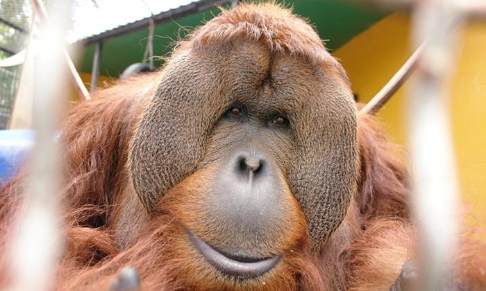Suncoast Primate Sanctuary - Suncoast Primate Sanctuary: Monkey-Feeding Experience for Two or Four at Suncoast Primate Sanctuary (Up to 40% Off)