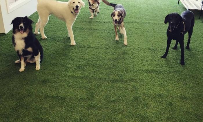 Bones & Bacon Pet Resort - West Dallas: Five Days of Doggy Daycare at Bones & Bacon Pet Resort (25% Off)