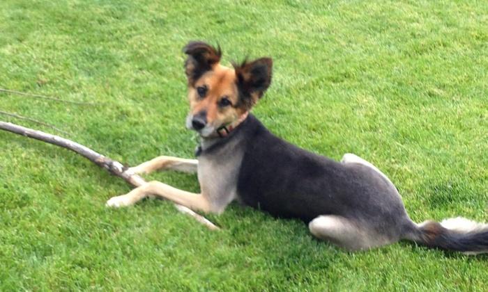 Dognasium Daycare & Boarding - Reno: Three Days of Doggy Daycare at Dognasium Daycare & Boarding  (45% Off)