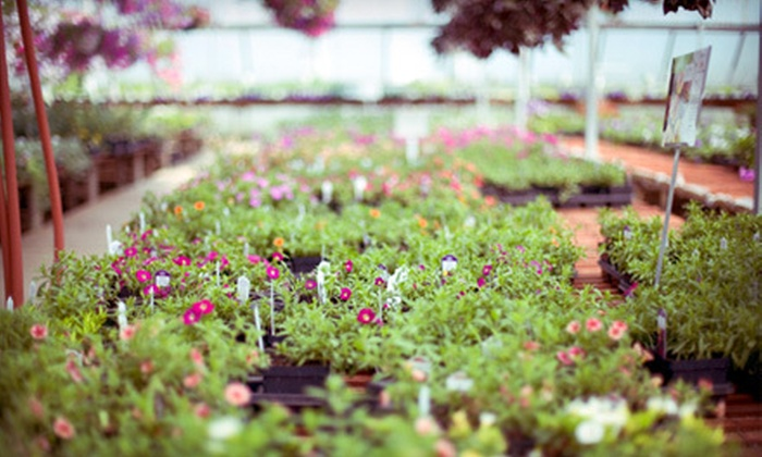 McAuslan's Nursery - Snohomish: $25 for $50 Worth of Plants, Flowers, Shrubs, and Trees at McAuslan's Nursery in Snohomish