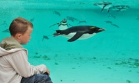 ZSL London Zoo: General or Fast Track Admission Plus £5 Groupon Credit From £24.25