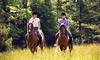 Matchmoor Riding Centre - Bolton: Private Horse Riding Lesson Plus Moorland Trek from £15 at MatchMoor