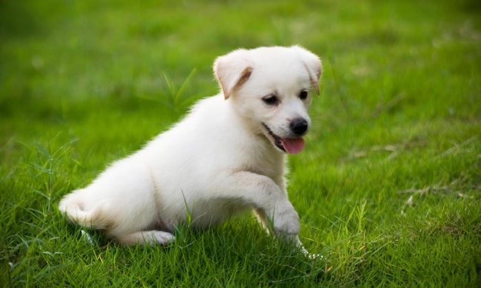 usa carpet cleaning tx - Dallas: Pet-Urine-Removal Treatment from usa carpet cleaning tx (55% Off)