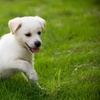 55% Off a Pet-Urine-Removal Treatment