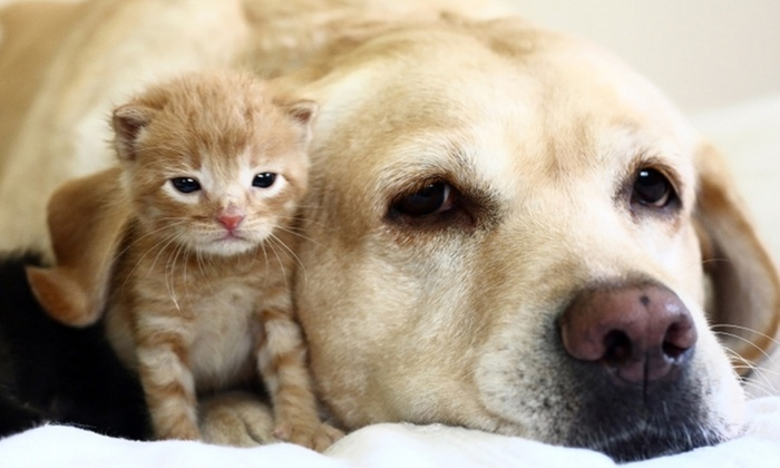 Shallowford Animal Hospital - Chattanooga: $20 for Vet Visit with Pet Exam and Heartworm Test at Shallowford Animal Hospital ($89 Value)