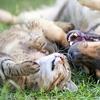 Mascotas: vacuna o esterilización