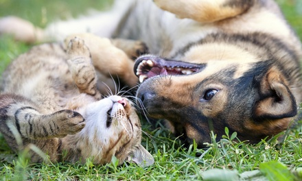 Canine or Feline Annual Exam or Wellness Exam at Greenfield Animal Hospital (50% Off)