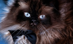 David Johnston Photography: Cat-Owner Photo Shoot Packages with Matted Print and Custom Phone App from David Johnston Photography (Up to 85% Off)