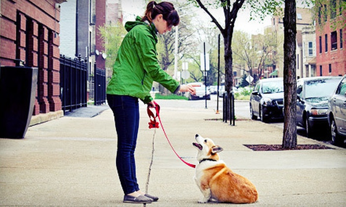 Dogs By Linda - Lincoln Park: Two or Four Structured Dog Walks or Three-Hour Dog-Whispering Session from Dogs By Linda (Up to 56% Off)
