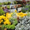 45%Off at Fresh Ideas Flower Company