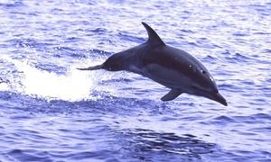 Mare Camp: Escursione in gommone con dolphin watching più aperitivo per 2 o 4 persone con Mare Camp (sconto fino a 63%)