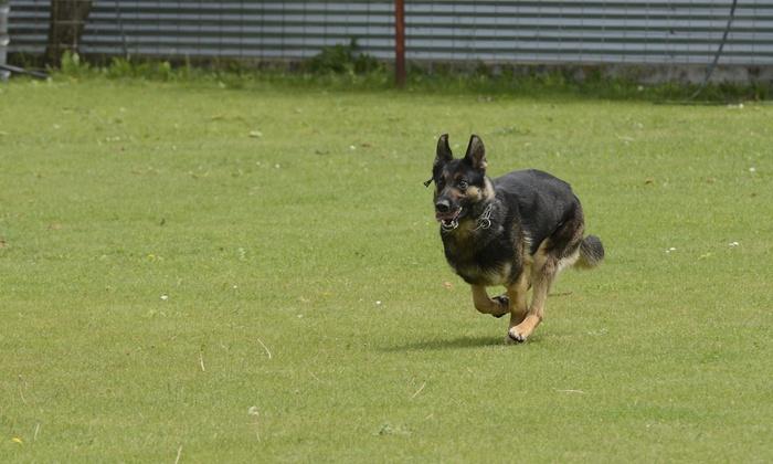 Redmark Training Kennels - Lexington: Three Days of Pet Boarding at Redmark Kennels (39% Off)