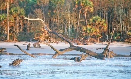 Dolphin Cruise at Sunset or Eco Tour of Capers Island for One or Two from Barrier Island Eco Tours (56% Off)