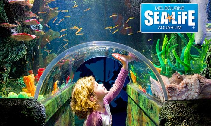 Melbourne Sealife Aquarium In Melbourne Groupon