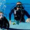 Half Off Scuba Certification from Dip 'N Dive