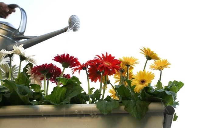 EDEN GardenHouse - Phoenix College: Up to 51% Off Florist — EDEN GardenHouse