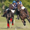Houston Polo Club – Half Off Match for One or Six