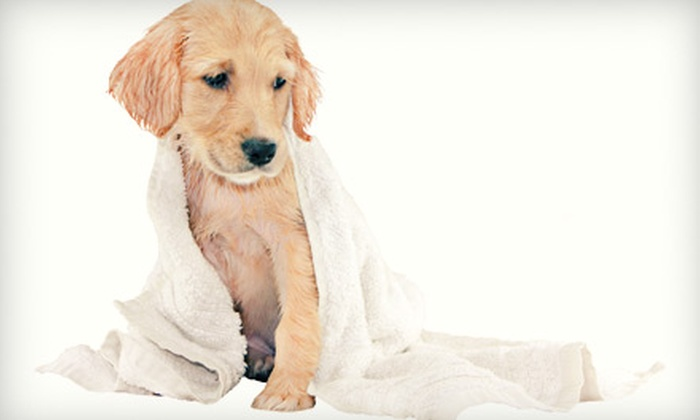 Luxury Pet Spa & Boutique - New Hyde Park: Bath or Full Grooming for a Dog at Luxury Pet Spa & Boutique (Up to 53% Off). Five Options Available.
