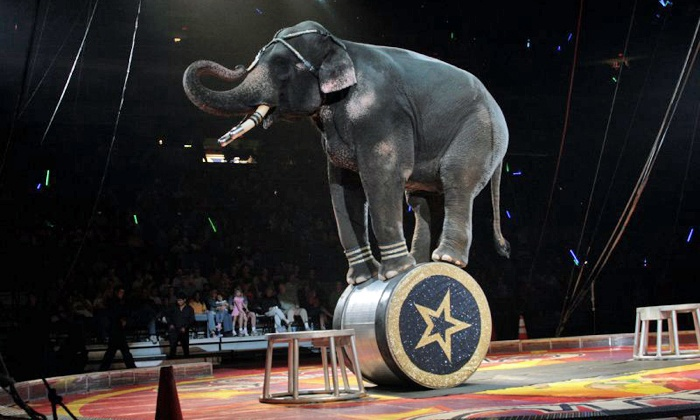 Zelzah Shrine Circus - Orleans Arena: Zelzah Shrine Circus at Orleans Arena on January 9–12 (Up to 42% Off)