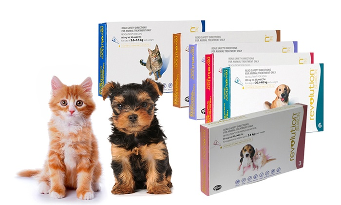 Revolution Flea Treatment Groupon