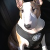 American Kennel Club Car Harness for Dogs