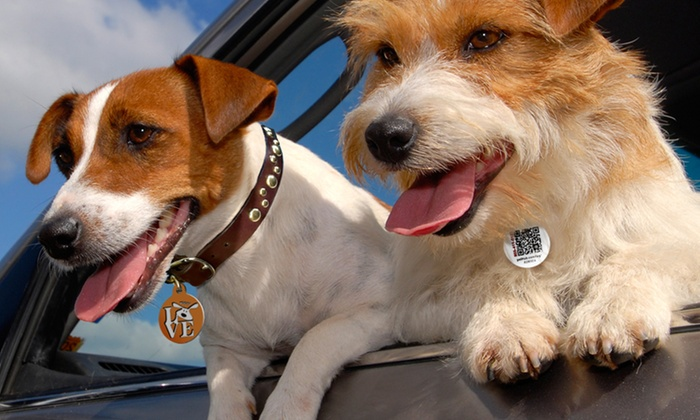 PetHub Digital ID Tags with GPS & Lost-Pet Services: One-Year Lost-Pet Service with Optional Lost-Pet Medical Insurance from PetHub (Up to 58% Off). Free Shipping.