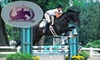 56% Off a Horseback-Riding Lesson in Grayslake