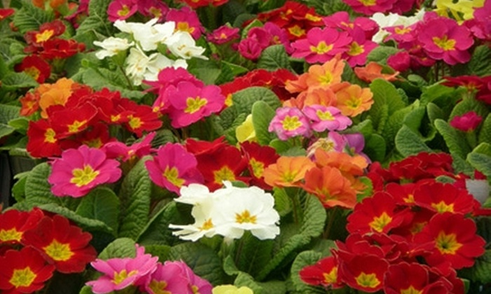 Campbell & Ferrara Outdoor Living - Annandale: $15 for $30 Worth of Plants, Flowers, and Gardening Accessories at Campbell & Ferrara Outdoor Living