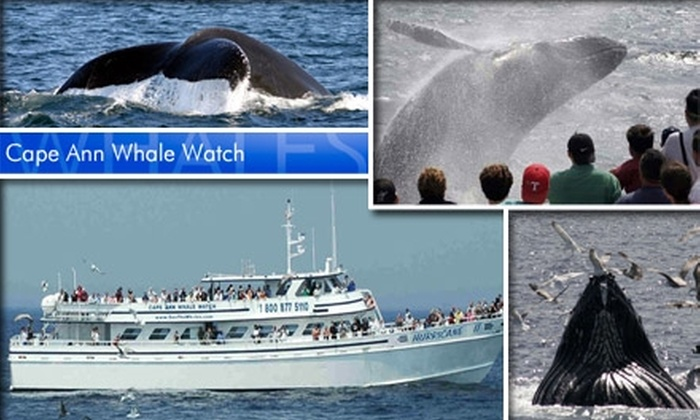 Cape Ann Whale Watch - Gloucester: $25 for One Ticket to Cape Ann Whale Watch—Just Pennies per Pound
