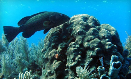 Complete Scuba-Certification Course (a $450 value) - Islanders Dive Center in Bowling Green