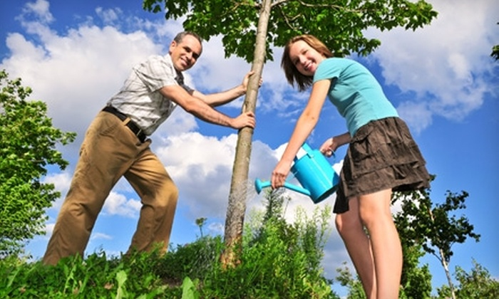 Sugarloaf Landscape Nursery - Edwardsville: Plants and Trees at Sugarloaf Landscape Nursery in Edwardsville. Two Options Available.