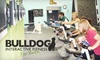 Bulldog Interactive Fitness - 400 West: $6 for Stay N' Play 90-Minute Pass to Bulldog Interactive Fitness ($12 Value)