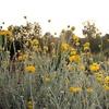 Rancho Santa Ana Botanic Garden – Up to Half Off Admission