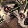 61% Off Zoological-Society Membership in Lodi