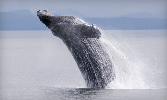 Seaforth Boat Rentals - San Diego Bay: Whale-Watching Tour for Two or Six from Seaforth Boat Rentals (Up to 55% Off)