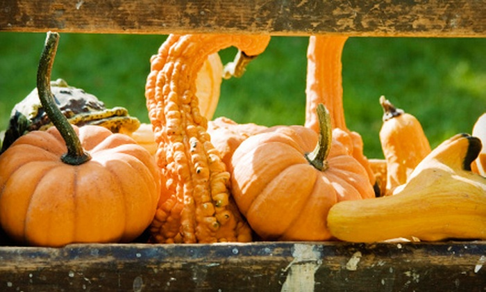 The Pumpkin Patch - Caledonia: $20 for $40 Worth of Tickets to Attractions at The Pumpkin Patch