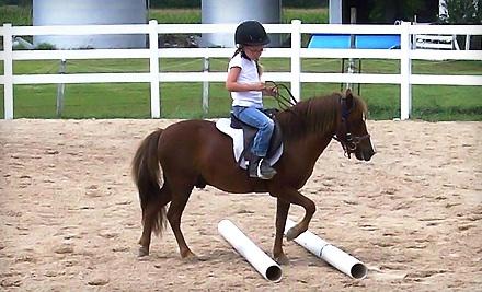 Johnson Horse Solutions - Johnson Horse Solutions in High Ridge