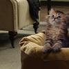 Cat Nap Pet Beds