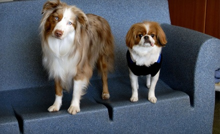 1 Night of Dog Boarding in a Luxury Suite (a $60 value) - The Golden Paw in San Diego