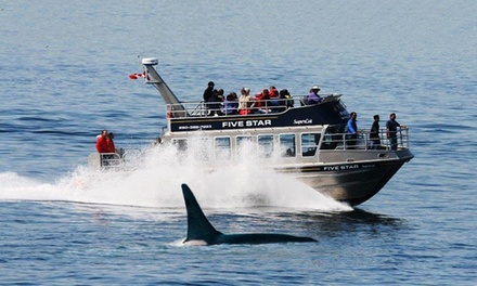 $52 for a Three-Hour Wildlife/Whale Watching Tour from Five Star Whale Watching Ltd. ($105 Value)