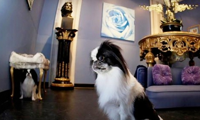 Chateau Poochie - Miami: Dog Daycare or Boarding at Chateau Poochie