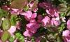 Wells Nursery LLC - Mount Vernon: $25 for $50 Worth of Plants at Wells Nursery in Mount Vernon