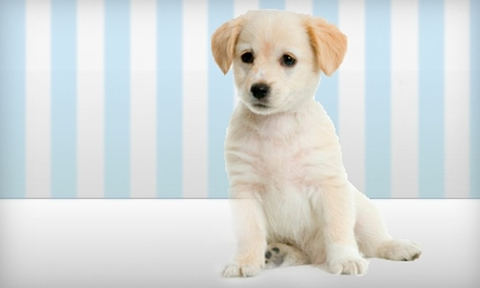 AthensPaws - Athens, GA: $10 for $20 Worth of Pet-Sitting Services from AthensPaws