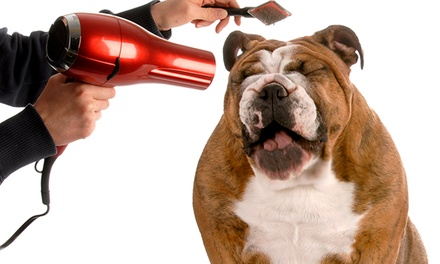$24.99 for an Accredited Guide to Dog-Grooming Course at Holly and Hugo ($175 Value)