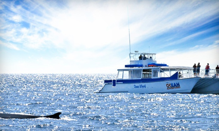 OCean Adventures - Orange County: One Adult Ticket or One Adult Ticket with Drinks to a Sunset Harbor and Beyond Cruise from OCean Adventures in Dana Point
