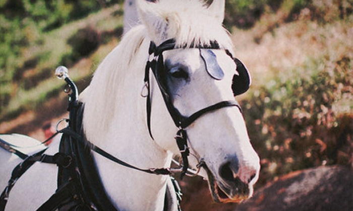 The Ranch at Bandy Canyon - Escondido, California: Horseback Trail Ride for One or Horseback Trail Ride with Wine for Two at The Ranch at Bandy Canyon (Up to 56% Off)