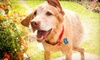 "Ticklish Paw Pet Photography - Houston: $69 for Pet Photo Session and 11"" x 14"" Print from Ticklish Paw Photography ($250 Value)"